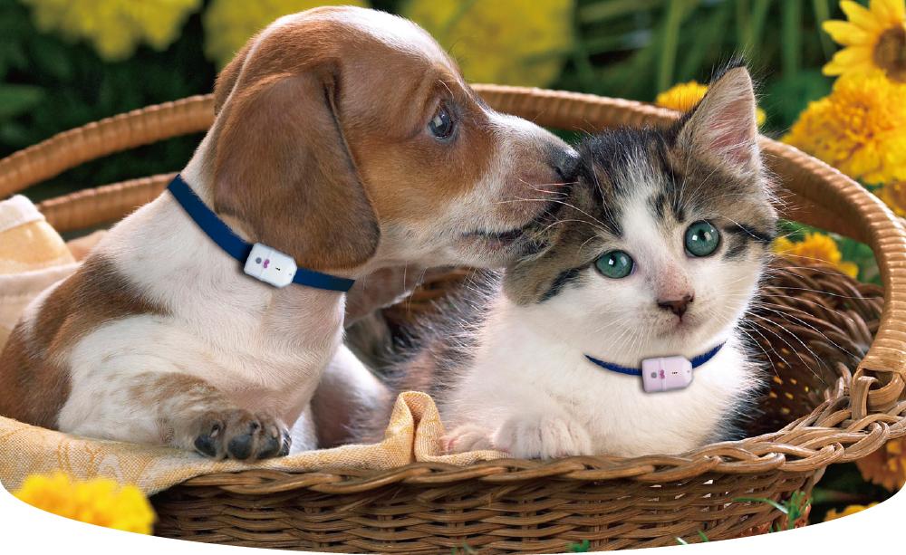 ردیاب حیوانات خانگی
